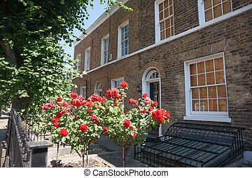 Red roses in suburban garden
