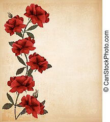 Red roses on old paper background. Vector.