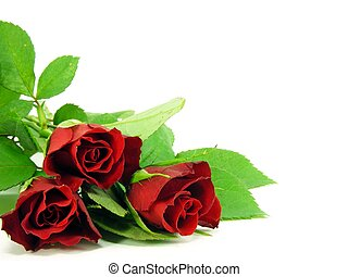 red roses on white background - A selection of red roses on ...