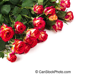 Red roses on white background with copy space