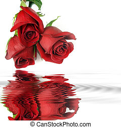 Red roses reflection in water