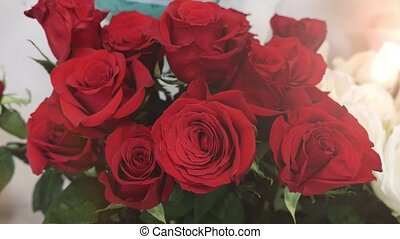 Red roses with fresh petals and dew drops looking lovely in...