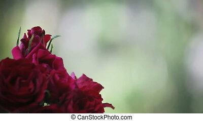 red roses with hummingbird - a ruby-throated hummingbird...