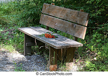 Red rowan branches lie on a bench in the forest