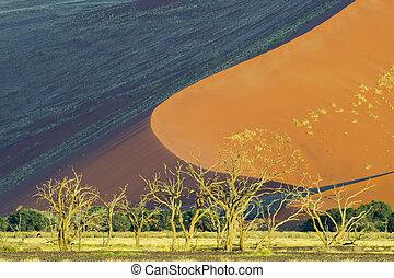 Red sanddune