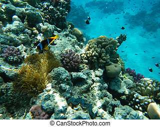 Red Sea coral reef - Corals and Sponge with Tropical Fish on...