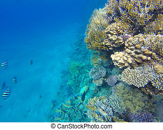 Red Sea fishes on a coral reef. Underwater Snorkeling - Red ...