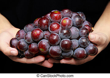Red seedless grapes, The red grape seeds and galling.