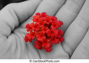 Red small flower softly held in a hand