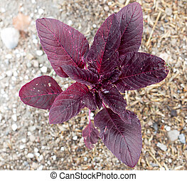 red small plant in the ground