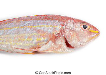Red snapper fish isolated on white background