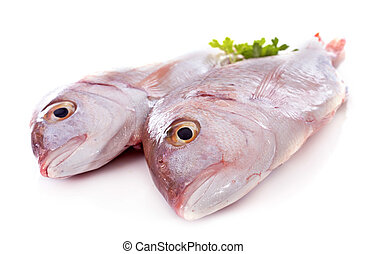 Red Snapper in front of white background