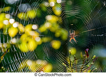 red spider in the web on beautiful forest bokeh - lovely...