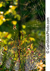 red spider in the web on beautiful foliage bokeh - lovely...