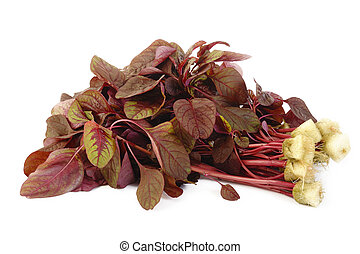 red spinach on white background