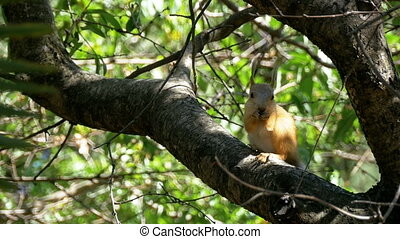 Red Squirrel Eating Nut Sitting on a Tree Trunk. Slow Motion...