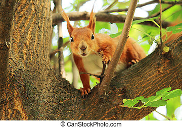 Red squirrel sitting on the tree close-up