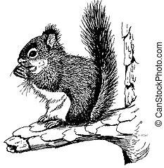 Red Squirrel Tamiasciurus hudsonicus Pen-and-Ink Drawing