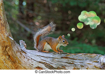 Red Squirrel with Thought Bubble