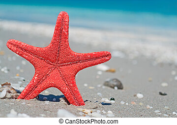 red star and blue sea - red starfish by the shoreline
