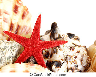 red starfish and sea shells - close-up of a red starfish...