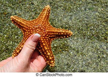 Red starfish in human hand