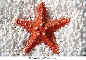 red starfish