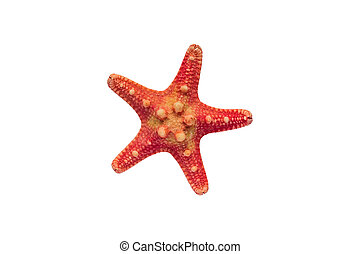 Red starfish isolated on white background with clipping path