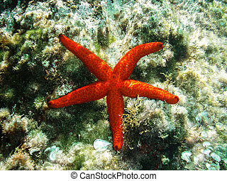 red starfish on a bed of seaweed