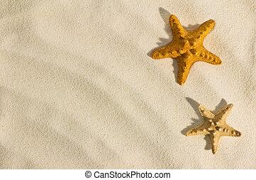 starfish - red starfish on sand close up
