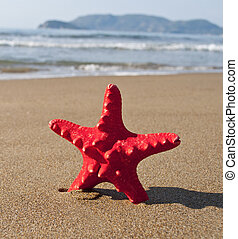 Red starfish on sunny tropical beach