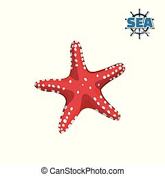 Red starfish on white background. Isolated drawing