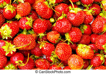 Red strawberries isolated on the white background