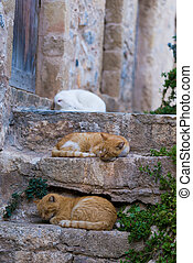 Red stray cat adult on a wall between the medieval streets ...