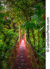 Red hanging suspension bridge in the jungle of Monteverde Cloud Forest, Costa Rica