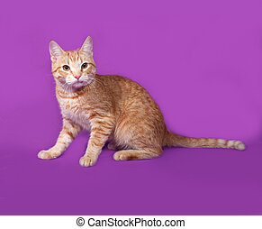 Red tabby cat sitting on lilac