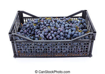 Red table grapes (Vitis) in plastic crate
