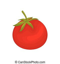 Red tomato closeup. Vector illustration on white background.