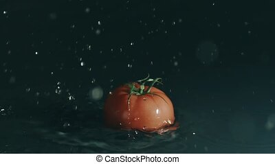 Red tomato falls on shallow water surface. Slow motion, shot...