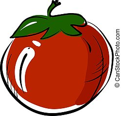 Red tomato, illustration, vector on white background.
