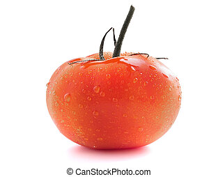 Red tomato on a sprig with water drops