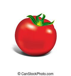Red tomato on white background, illustration