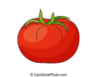 Red tomato vector illustration isolated on white background.