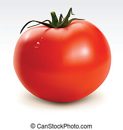 Red tomato with drops - Vector illustration of big red...