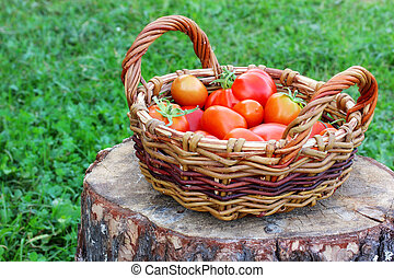 Red tomatoes in a basket on a stump.