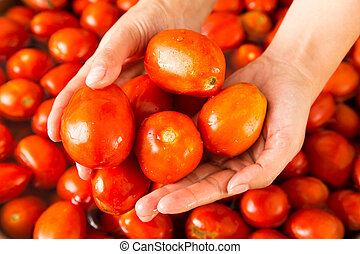 Red tomatoes in the hands of a girl