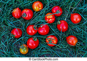 red tomatoes lie in the green grass