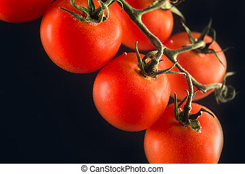 Red tomatoes on a branch isolated