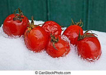 red tomatoes on a snowdrift near a green wall