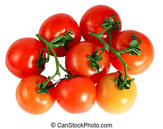 Red tomatoes on branch